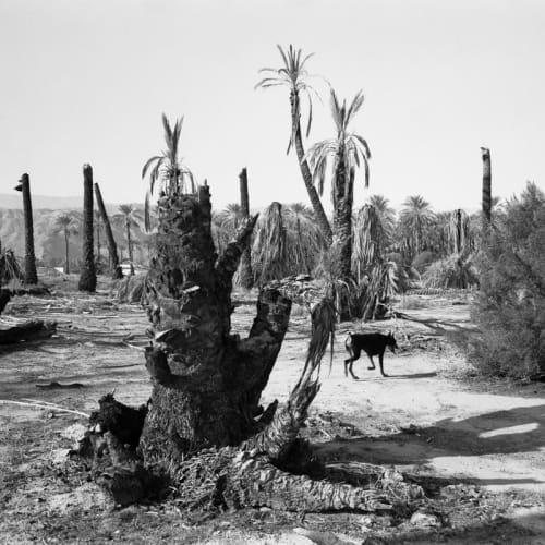 Mimi Plumb, Palm Desert, 1987
