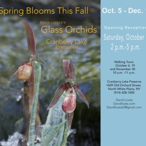 Kenise Barnes Fine Art was proud to support gallery artist David Licata as he led walking tours through Cranberry Lake Preserve to show and discuss his glass orchid installations.