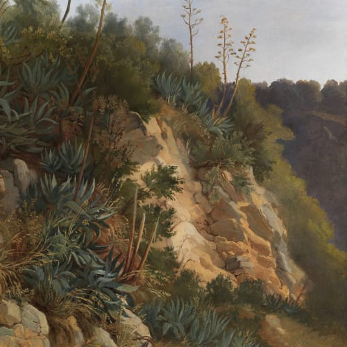 Edmund HOTTENROTH, Study of Agaves, 19th century