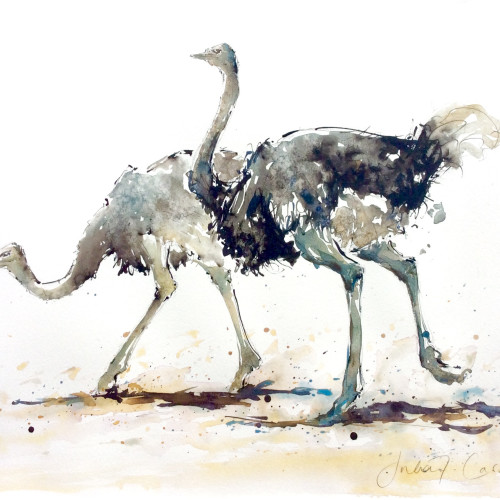 Julia Cassels - Ostriches Courting (Hungerford Gallery)