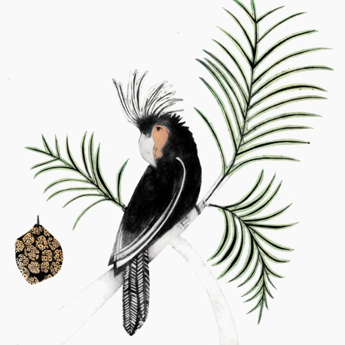 Beatrice Forshall - Palm Cockatoo (Framed)