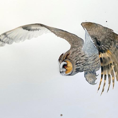 Karl Martens - Long-Eared Owl (Unframed) (London Gallery)