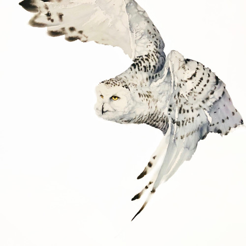 Karl Martens - Snowy Owl, Female (Hungerford Gallery)