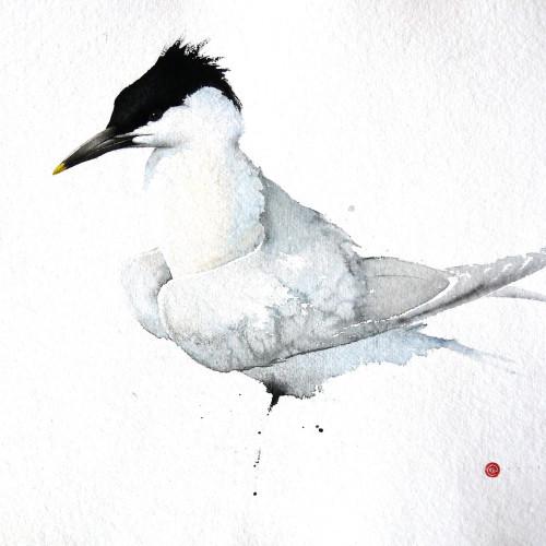 Karl Martens - Sandwich Tern (Hungerford Gallery)
