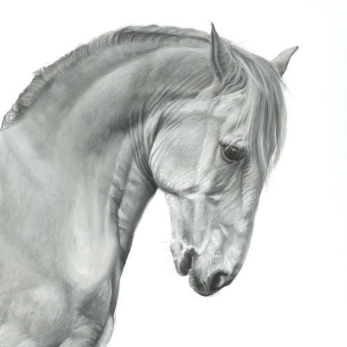 Lucy Boydell - Lusitano Stallion (Hungerford Gallery)