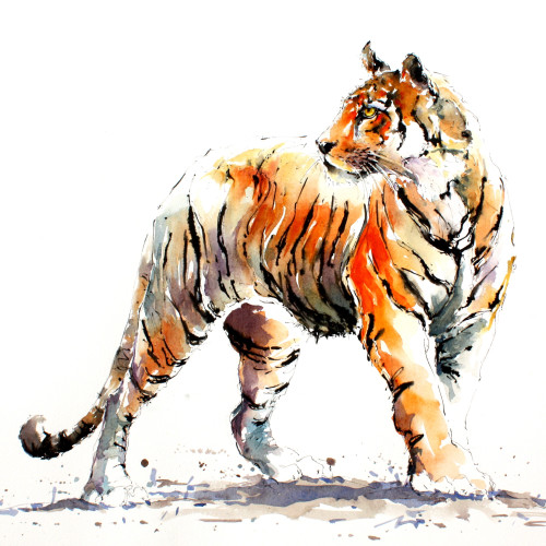 Julia Cassels - Tiger Stripes