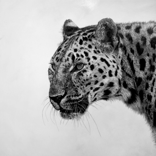 David Hunt - Leopard I (London Gallery)
