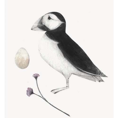 Beatrice Forshall - Puffin (Mounted)