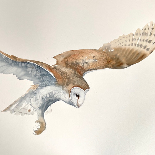 Karl Martens - Flying Barn Owl
