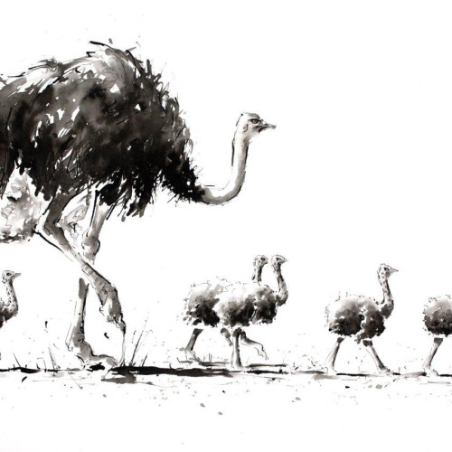 Julia Cassels - Ostrich Footsteps (Hungerford Gallery)