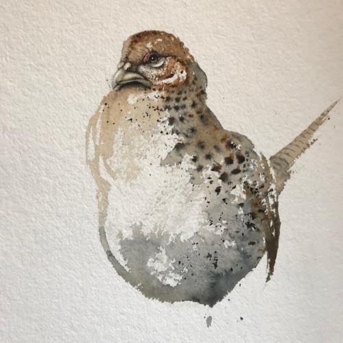 Karl Martens - Pheasant (Female) (Unframed)(Hungerford Gallery)