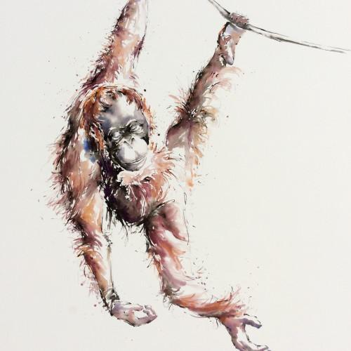 Julia Cassels - Minah, Just Hanging, Semenggoh, Borneo