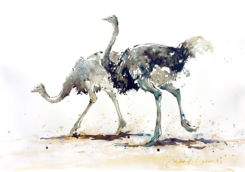 Julia Cassels, Ostriches Courting (Hungerford Gallery)