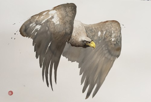 Karl Martens, White Tailed Eagle (Framed) (London Gallery)