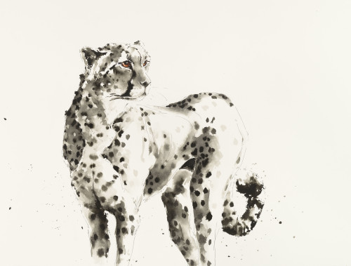 Julia Cassels, Cheetah