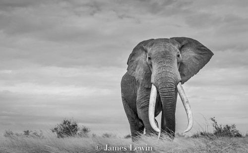 James Lewin, African Icon (Unframed)