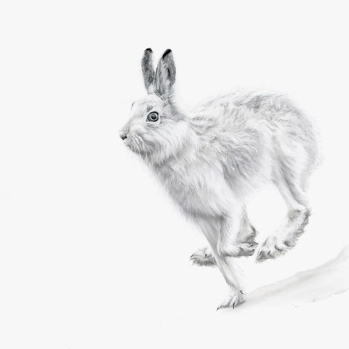 Lucy Boydell, Mountain Hare (Hungerford Gallery)