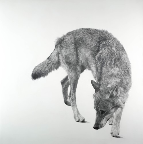David Hunt, Canis Lupus II (Hungerford Gallery)