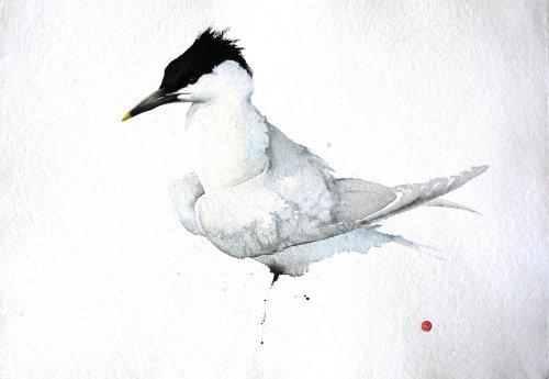 Karl Martens, Sandwich Tern (Hungerford Gallery)