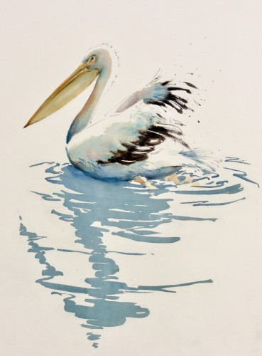 Julia Cassels, Pelican Reflection (Hungerford Gallery)