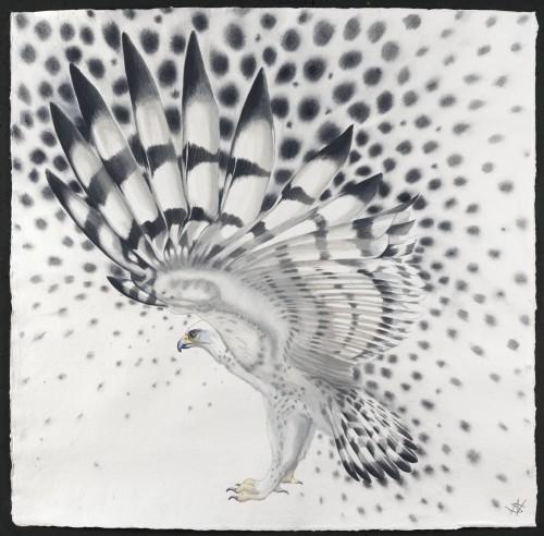 Nikki Stevens, Molecule Bird (Hungerford Gallery), 2015