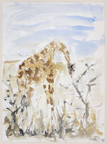 Christine Seifert, Giraffe Grazing on a Tree (Unframed)