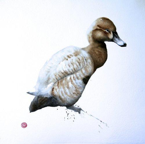 Karl Martens, Pochard Female (Framed) Hungerford Gallery
