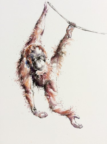 Julia Cassels, Minah, Just Hanging, Semenggoh, Borneo (Hungerford Gallery)