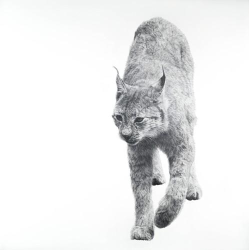 David Hunt, Lynx I (Hungerford Gallery)