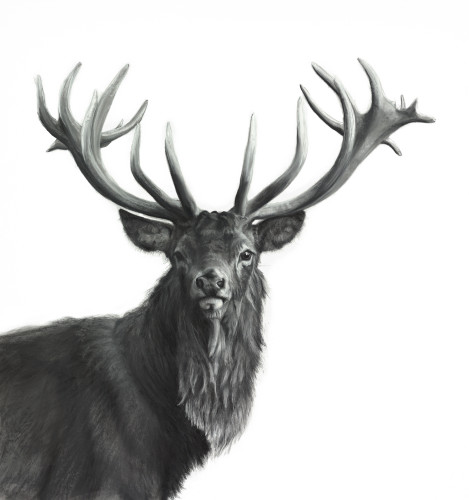 Lucy Boydell, Watchful Stag (Hungerford Gallery)