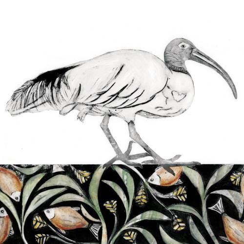 Beatrice Forshall, Sacred Ibis