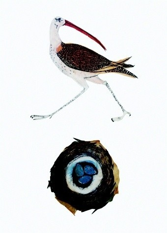 Beatrice Forshall, Eskimo Curlew (Unframed)
