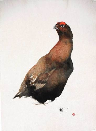 Red Grouse I (Unframed) (Hungerford Gallery)