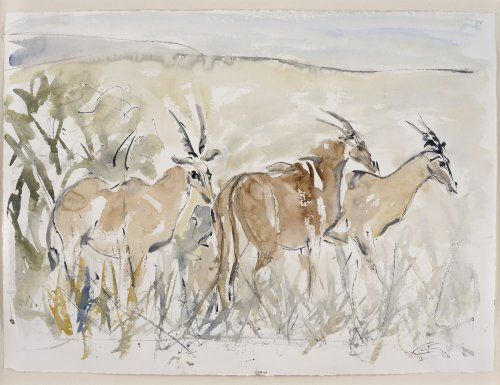 Christine Seifert, Eland Antelope (Framed) (London Gallery)