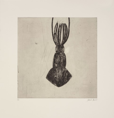 Kate Boxer, Squid (Mounted)