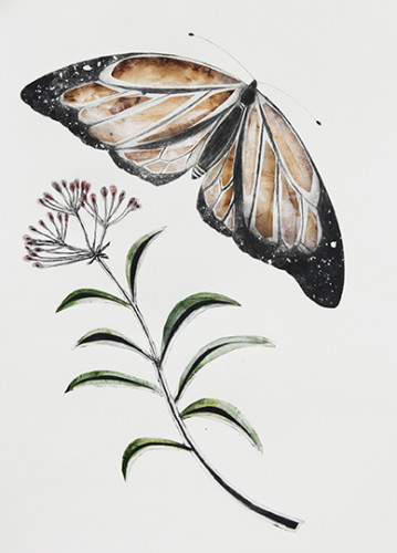 Beatrice Forshall, Monarch Butterfly (Mounted)
