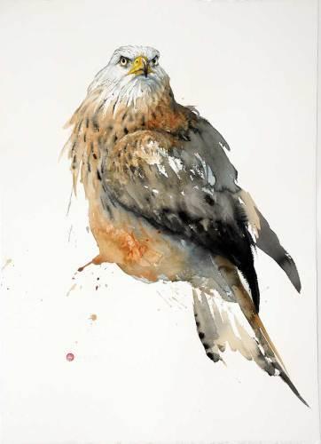 Red Kite (Unframed) (Hungerford Gallery)