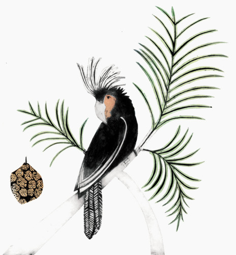 Beatrice Forshall, Palm Cockatoo (Framed)