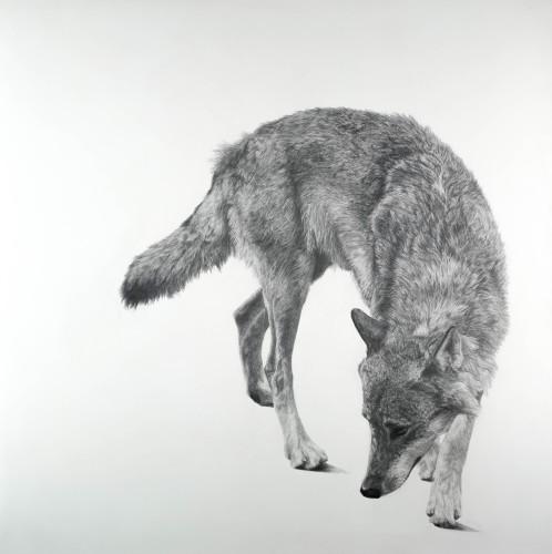 David Hunt, Canis Lupus II (London Gallery)