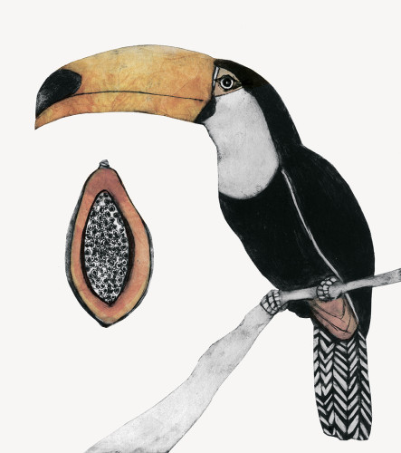 Beatrice Forshall, Toco Toucan (Framed)