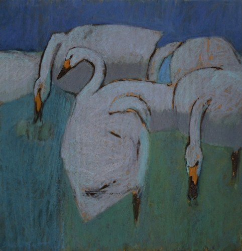 Dafila Scott, Whooper Swans and a Bewick's Swan on the Fen