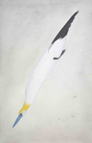 Kate Boxer, Gannet (Mounted)