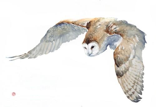 Barn Owl (Framed) (Hungerford Gallery)