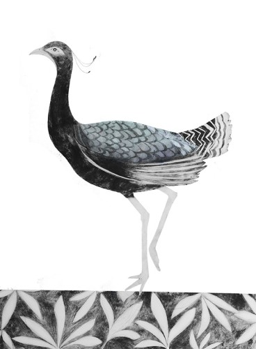 Beatrice Forshall, Lesser Florican (Mounted)