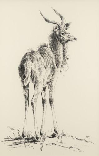Julia Cassels, Kudu (Hungerford Gallery)