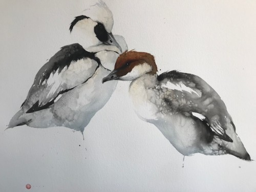 Smew Male and Female (Unframed) (Hungerford Gallery)