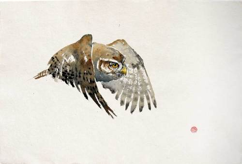 Pygmy Owl (Unframed) (Hungerford Gallery)