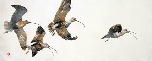 Curlews (Unframed)