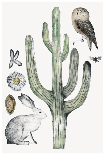 Beatrice Forshall, Saguaro Cactus (Framed)