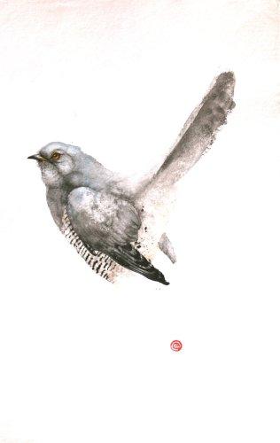 Cuckoo Male (Framed)
